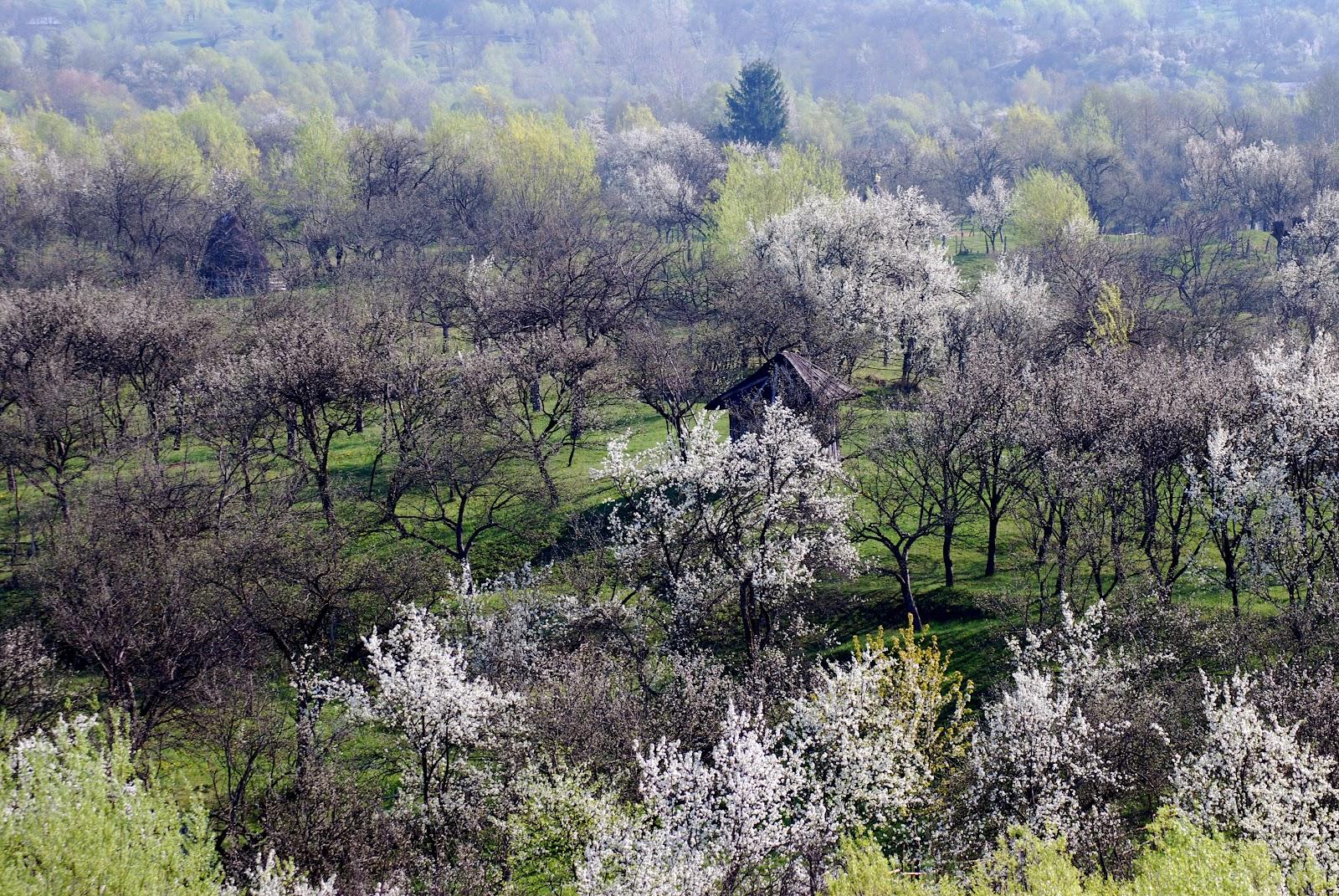 Primăvara în Corbi
